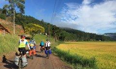 Cicloturistas passando ao lado da arrozal